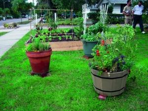 Front yard garden in Sarasota. Placing bricks under the pots promotes good drainage.