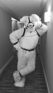 """From Ch.4 """"The Other Wild Kingdom."""" As evidenced by this bunny's bondage wear, sometimes one fetish is not enough. Photo by Lori Ballard."""