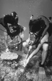Gene and Dan Robbin take a core of coral