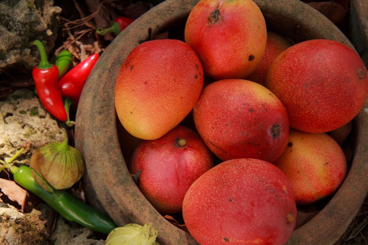 Mango Miami Food Review