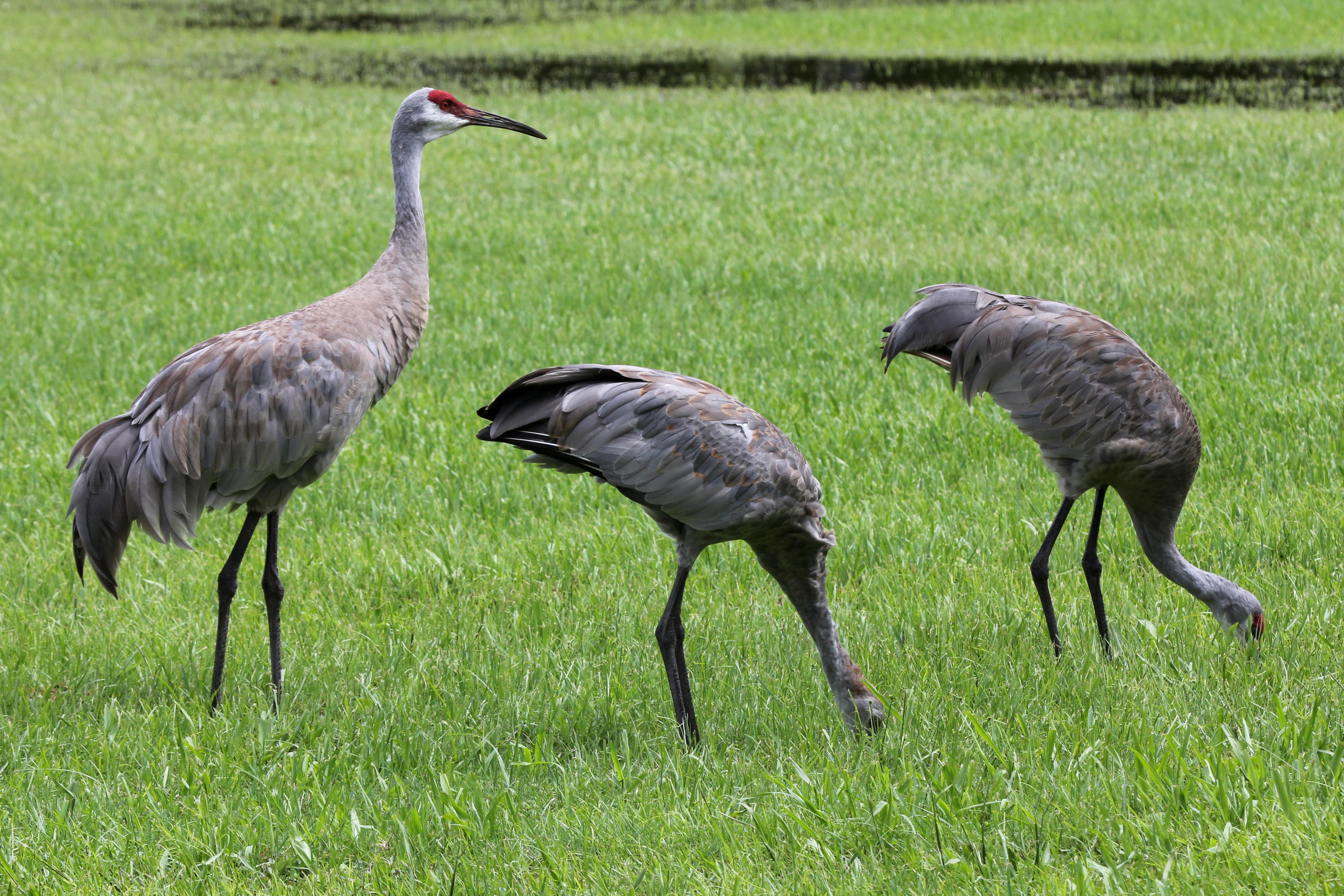 Atraer Aves: Suministro de Jardinero