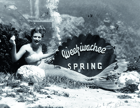 Nancy Tribble Benda wears the Mr.Peabody tail she was fitted for in Hollywood, 1948. In the beginning, Weekiwachee was one word, but Newt Perry decided to split it into two words so it could fit on signs more easily. By permission of Nancy Tribble Benda.