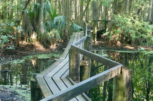 Highlands Hammock State Park Boardwalk