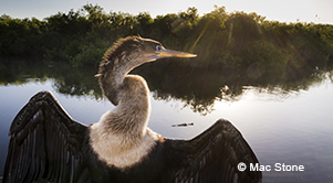 Photograph from Everglades: America's Wetland, by Mac Stone