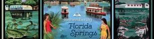 upf_flamingo_remembering-florida-springs_large