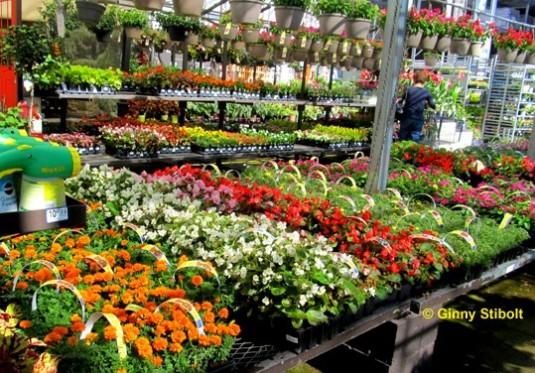 Stibolt-image-2_garden-center