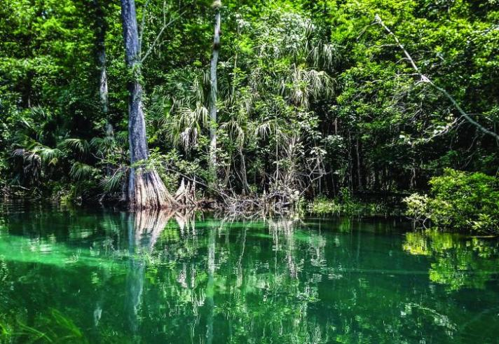 Ichetucknee-Springs_1_credit-Florida-State-Parks